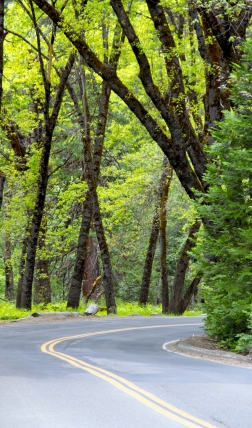 yosemite-winding-road-forest2